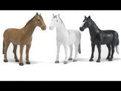 Imágenes de caballos para apreciar estos maravillosos seres.